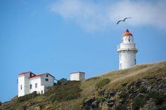 Taiaroa Head Lighthouse NZ