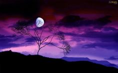 Moon-Behind-Trees.jpg (500×312)
