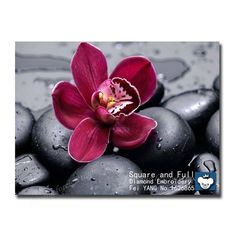 Find More Diamond Painting Cross Stitch Information about Rhinestone Pictures Flower on the stone diamond embroidery flowers diamond mosaic kits crystal Painting Embroidery with diamonds,High Quality wool felt berets,China wool sweater Suppliers, Cheap felt top from JULYDiamondEmbroidery on Aliexpress.com