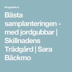 Bästa samplanteringen - med jordgubbar   Skillnadens Trädgård   Sara Bäckmo