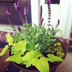 Front Door Potted Plant