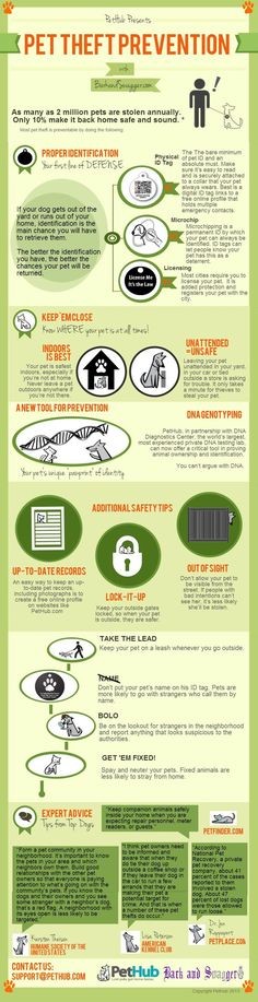 Really important: #tips to help prevent pet theft. #infographic #petprotection