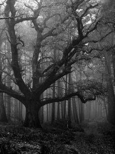 Gloomy forest cemetery