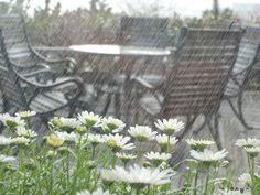 hareketli yağmur gif