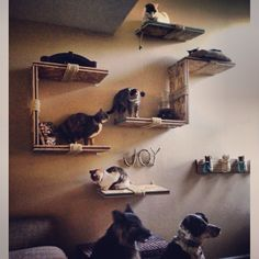 Updated Cat Shelves with all the pets :D