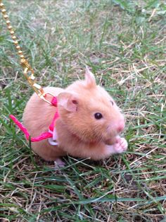 i like the idea of making a wee, tiny harness for our hammy so we could take her outside! :3 definitely not something around the neck like this....