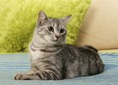 Choking in Cats - Heimlich Maneuver for Cats | petMD http://www.petmd.com/cat/emergency/common-emergencies/e_ct_choking_and_heimlich_maneuver?utm_source=Facebook&utm_campaign=petMD_CatChoking_12202016&utm_medium=SocialMedia