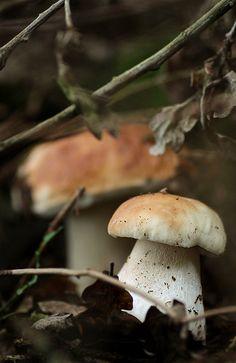 boletus at a forest cranny