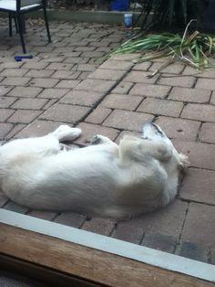 It looks like she's dead. But she's most definitely not !!