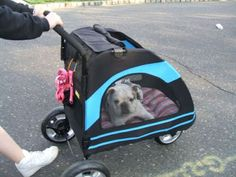 The Healthy Pet: My review on the Pet Gear Roadster Stroller for dogs. Is it worth the price?  http://bulldogvitamins.blogspot.com/2016/12/the-best-pet-strollers-for-new-year.html