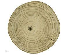 Ginkgo biloba – Wikipédia, a enciclopédia livre Decorative Plates, Trees, Ginkgo Biloba, Chambon, Toulouse, Algebra, Apothecary, Woodwork, Hotels