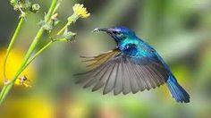 Resultado de imagen para colibri tomando vuelo