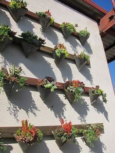 A way to hang succulent plants around the patio.