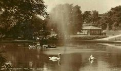 """See 17 photos and 1 tip from 87 visitors to Peel Park. """"Lovely views, nice lake and walks"""" Bradford, Park, Parks"""