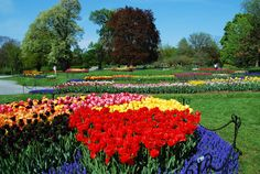 Donning in Dutch tradition, this fabulous festival is set in Washington Park every Spring season.  With an array of sweet and rare varieties of Tulips, onlookers admire their beauty, enjoy entertainment, food vendors, and crown the years Tulip Queen.   A wonderful inspiration for the season!
