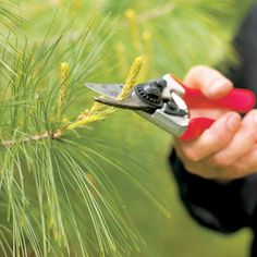 Pruning guide for most plants, trees, shrubs....