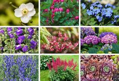 Perennials that Do Well in Shade