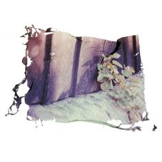 Items similar to Wall Flower, Polaroid Emulsion Lift Print 7 x 5 inches on Etsy Mirror Photography, Photography Classes, Photography Photos, Sweet Station, Photo Class, Flower Wall, Concept Art, Contemporary Art, Artsy