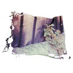 Items similar to Wall Flower, Polaroid Emulsion Lift Print 7 x 5 inches on Etsy Mirror Photography, Photography Classes, Photography Photos, Sweet Station, Photo Class, Photo Transfer, Flower Wall, Concept Art, Artsy