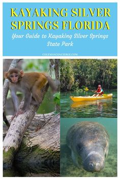 Looking for a bucket list outdoor activity near Orlando Florida? Kayaking the crystal clear waters of Silver Springs State Park will bring you up close and personal with its wildlife inhabitants such as wild monkeys, manatee, alligators, turtles, and a variety of birds. Click in to learn more about this amazing kayaking trip! #kayaking #Florida #springs # Orlando #monkeys #manatees Travel Info, Time Travel, Travel Ideas, Travel Inspiration, Travel Tips, Canada Travel, Usa Travel, Animal Experiences, Florida Springs