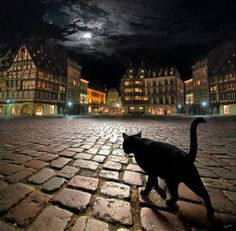 Stray cat in Strasbourg, France フランス・ストラスブール Strasbourg, Crazy Cat Lady, Crazy Cats, I Love Cats, Cool Cats, Foto One, Belle Photo, Cats And Kittens, Cats Bus