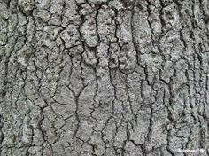 texture - Google Search
