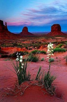 Monument Valley // Utah – My Store Beautiful World, Beautiful Places, Beautiful Pictures, Monument Valley Utah, Landscape Photos, Creative Landscape, Desert Landscape, Landscape Designs, Mountain Landscape
