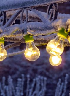 Circus lights in frozen garden Green Gables, Light Bulb, Frozen, Lights, Garden, Home Decor, Garten, Decoration Home, Room Decor