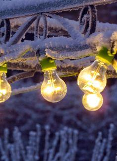 Circus lights in frozen garden