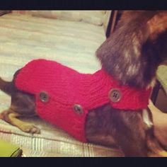 AlishaKnits: Side Button Dog Sweater