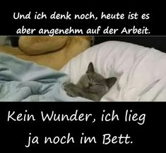 Humor, Dogs, Animals, Morning Sayings, Good Morning, Cute Pets, Cats, Animales, Animaux