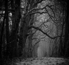 Why do I like spooky, dark photos? I want to take a walk here.