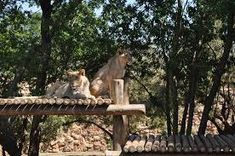 johannesburg zoo - Google Search Outdoor Furniture, Outdoor Decor, Google Search, Home Decor, Garden Furniture Outlet, Room Decor, Home Interior Design, Decoration Home, Lawn Furniture