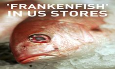 Ask These Food Stores to Reject Frankenfish! - PLEASE SIGN THE LETTER - Organic Consumers Association