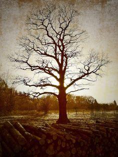 szlaki i bezdroża: Miechowickie przedwiośnie Country Roads, Painting, Art, Historia, Fotografia, Poland, Art Background, Painting Art, Kunst