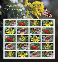 New stamps August 3rd. This stamp pays tribute to the beauty and importance of pollinators with stamps depicting two of our continent's most iconic, the monarch butterfly and the western honeybee, each shown industriously pollinating a variety of plants native to North America.