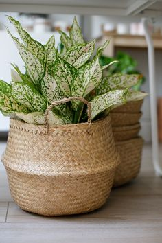 Versatile seagrass basket with handles. Pop a saucer in the bottom and place a plant inside or use it for storage. The unstructured nature of this basket makes it easy to fold down into a bowl shape for additional uses and easy storage. Plant Basket, Basket Planters, Halloween Mason Jars, Large Baskets, Plantation, Home And Deco, Plant Decor, Houseplants, Indoor Plants