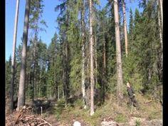Metsähallituksen metsätalouden ympäristöopas - YouTube