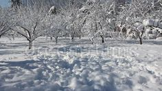 Video about Winter scene in park - snow covered trees in a sunny frosty day. Video of romania, forest, covered - 65407533 Snow Covered Trees, Winter Scenes, Stock Photos, Park, Nature, Outdoor, Outdoors, Naturaleza, Winter Scenery