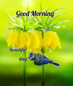 In today's post, we are going to present romantic good morning quotes and messages. If you are looking for romantic good morning quotes and messages, then you have come to the right place. Good Morning Flowers Pictures, Good Morning Friends Images, Latest Good Morning Images, Good Morning Beautiful Pictures, Beautiful Morning Messages, Good Morning Happy Sunday, Good Morning Cards, Good Morning Picture, Good Morning Greetings