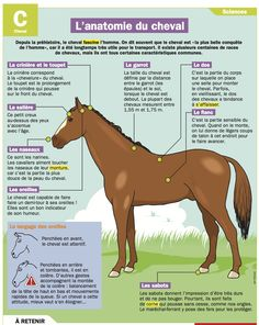 The Anatomy of the Horse - My Daily, the only daily news site for . The Anatomy of the Horse - My Flags Europe, Horse Anatomy, French Phrases, Types Of Horses, French Language Learning, Horse Tips, Horse Training, Horseback Riding, Equestrian