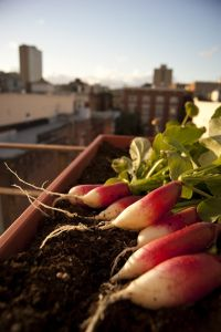 Fall Planting 101   HOMEGROWN. Garden Tips On Planting Times.