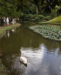 Terra Nostra Gardens in Ponta Delgado, the Azore Islands.