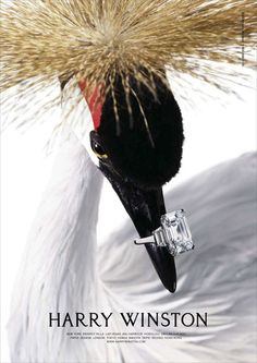 Laziz Hamani / Harry Winston - Animals - 2007