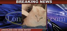The Suffolk County SPCA is investigating a horrific incident involving the death of a decorated war veteran's cat in Farmingville. The cat was left at its owner's residence after being tortured and mutilated, and the organization is working quickly to ensure that those responsible are brought to justice. Anyone with relevant information is urged to call the SCSPCA at 631-382-7722.