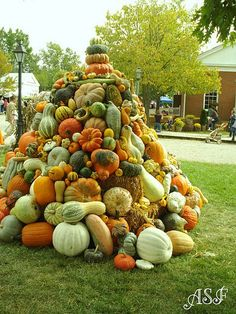 a pile of pumpkins and gourds----Janet would love this!
