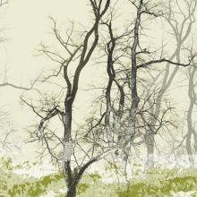 Fototapet - Wander Land Moss. Dyrt men mange sindssygt flotte motiver