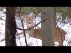Ingo Valgma: Metskits Youtube, Horses, Plants, Animals, Animales, Animaux, Animal, Plant, Animais