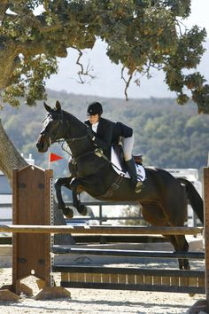 Helium Risin' soars in his new career as an eventer. #OTTB's rule!