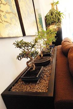 Bonzai trees behind sofa.  At: Behind The Sofa